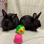 Bunnie and Clyde