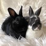 Sage & Linnie